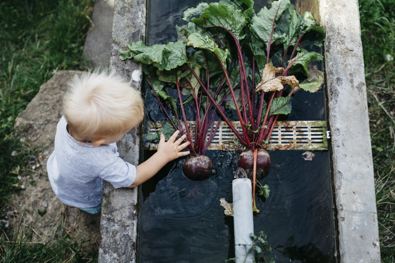 Little man is all over the beets!